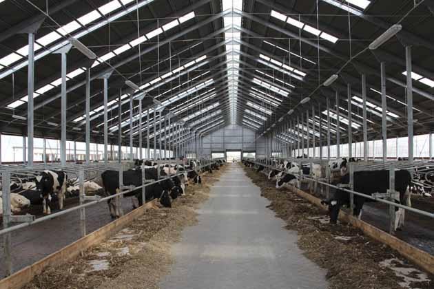 животноводческие фермы на заводе