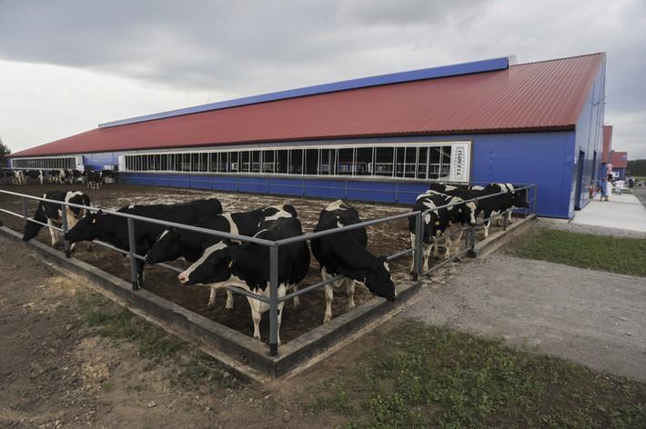 животноводческие фермы заказать